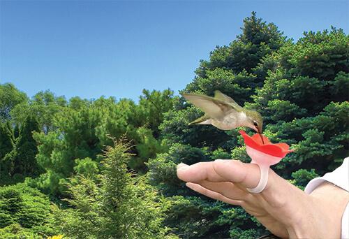 handing feeding hummingbirds with hummer ring